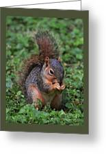 Squirrel Portrait # 3 Greeting Card