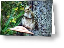 Squirrel Portrait Greeting Card