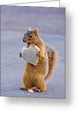 Squirrel Sandwich Greeting Card