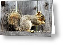 Squirrel - Snack Time Greeting Card