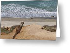 Squirrel Soaking In The Ocean View   Greeting Card