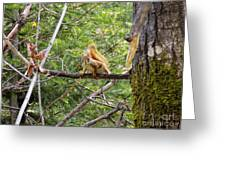Squirrel Standoff Greeting Card