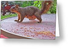 Squirrel Visits Me Greeting Card
