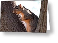 Squirrel With A Nut Greeting Card