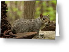 Squirrel With Anchor Greeting Card
