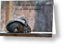 Squirrel With Fur Collar Greeting Card