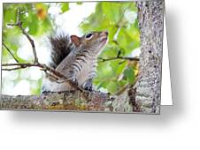 Squirrel With Personality Greeting Card