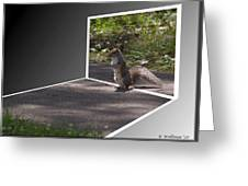 Squirrel World Greeting Card