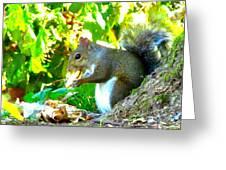 Squirrel1 Greeting Card