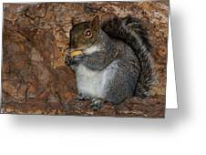 Squirrell Greeting Card