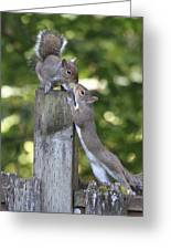 Squirrelly Affection Greeting Card