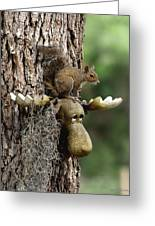 Squirrelly Thoughts Greeting Card