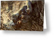 Squirrels - A Family Affair Xi Greeting Card