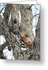 Squirrels At Play Vertically Greeting Card