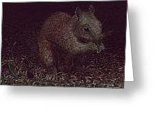 Squirrely Art Greeting Card