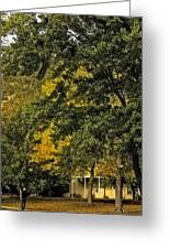 Seeing The Beauty In The Trees Greeting Card