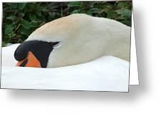 Sssh I'm Sleeping Greeting Card