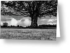 St. Benedict Abbey Single Tree In Summer Greeting Card