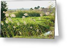 St Johns River 2 Greeting Card