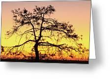 St Johns River Tree Greeting Card