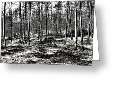 St Lawrence's Wood, Hartshill Hayes Greeting Card