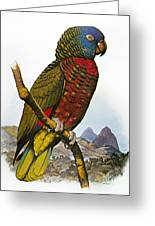 St Lucia Amazon Parrot Greeting Card