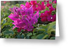 St Lucia Floral Greeting Card