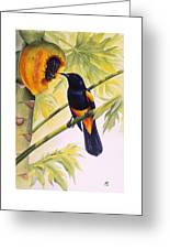 St. Lucia Oriole And Papaya Greeting Card by Christopher Cox