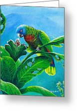 St. Lucia Parrot And Bwa Pain Marron Greeting Card