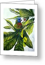 St. Lucia Parrot And Fruit Greeting Card