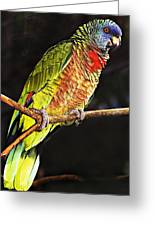 St Lucia Parrot Greeting Card