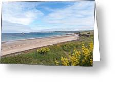 St Ouen's Bay Jersey Greeting Card