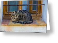 St Paul Cat Greeting Card