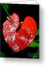 A Point To Your Heart Greeting Card