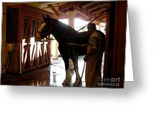 Stable Groom - 1 Greeting Card