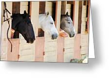 Stable Series  Greeting Card