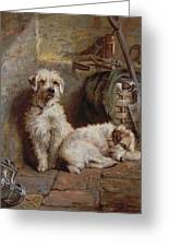 Stablemates Greeting Card by John Fitz Marshall