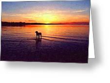 Staffordshire Bull Terrier On Lake Greeting Card by Michael Tompsett