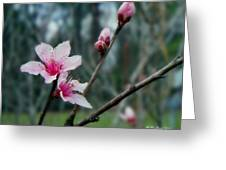 Stages Of Spring Greeting Card