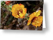 Staghorn Cactus Blossons Greeting Card