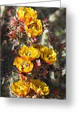 Staghorn Cholla Blossoms Greeting Card
