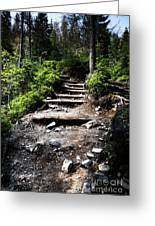 Stair Stone Walkway In The Forest Greeting Card