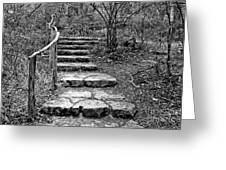Stairway To Nature Greeting Card