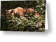 Stalking Big Cat Greeting Card