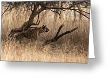 Stalking Greeting Card