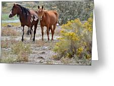 Stallion And Mare Greeting Card