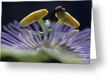 Stamen Of A Passionflower Greeting Card
