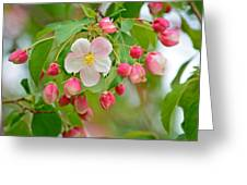 Stand Alone Japanese Cherry Blossom Greeting Card