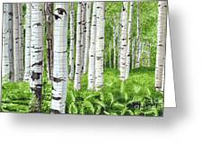 Stand Of Birch Greeting Card