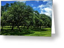 Stand Of Oaks Greeting Card